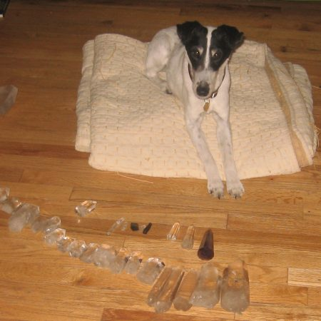 Beauty, beloved smooth fox terrier, was a devoted assistant in our work.